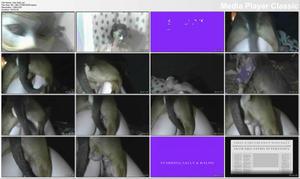 http://img170.imagevenue.com/loc38/th_540217171_IntroSally.avi_thumbs_2017.04.18_23.31.55_123_38lo.jpg